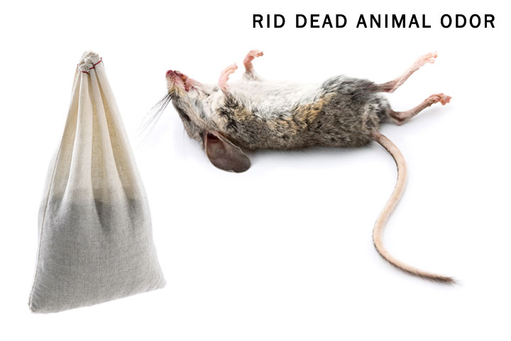 How to get rid of dead mouse smell Does cold air eliminate odor
