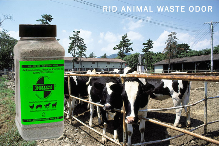 Rid-Animal-Waste-Odor