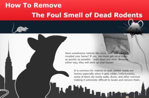 How-to-Remove-the-Foul-Smell-of-Dead-Rod